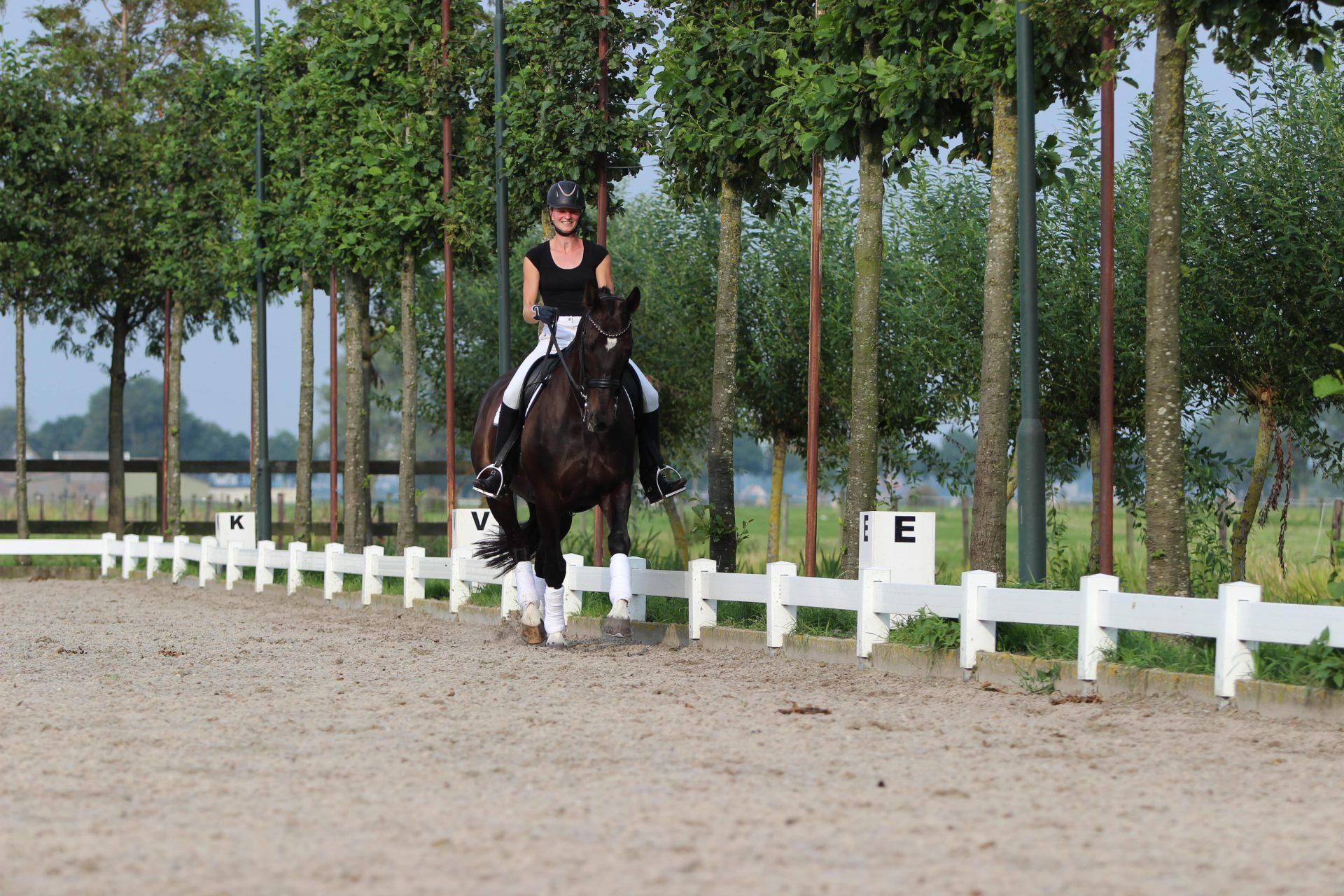 Grecon Manegebodems - Passie voor paarden